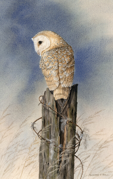 Owl fine art print by Jenny Bell at Myton Gallery Hull