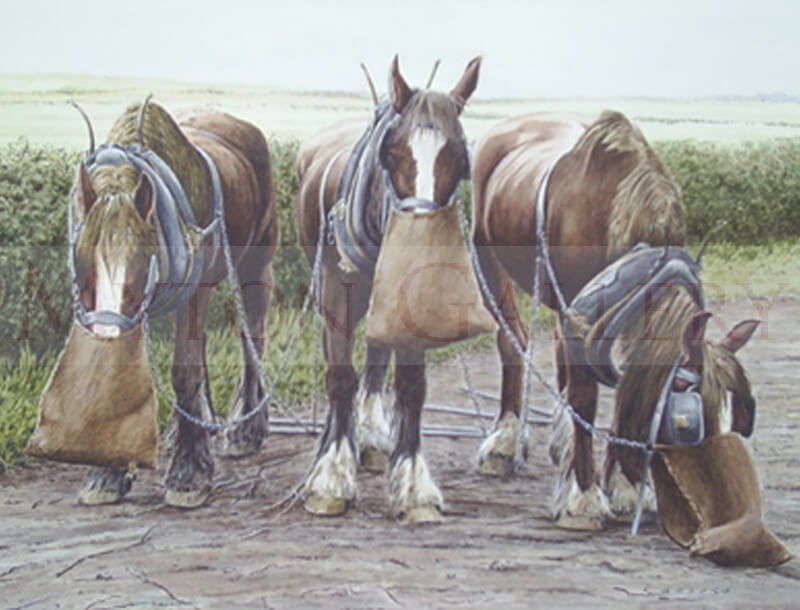 Shire Horses at Feeding Time painting by artist Ron Spoors